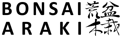 Bonsai Araki