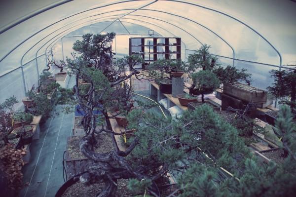 pépinière bonsai araki 3