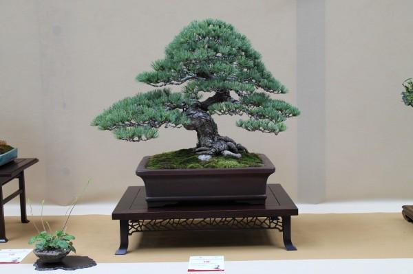 pin blanc eba wroclaw 2014